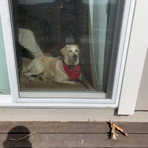Biscuit was sad we repaired the screen he was using as a doggie door!
