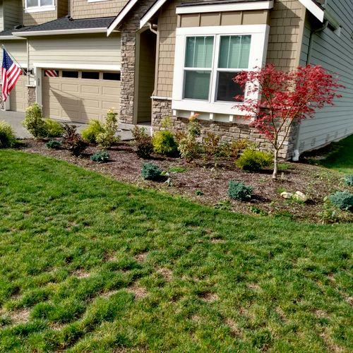 weeding and re-mulching before